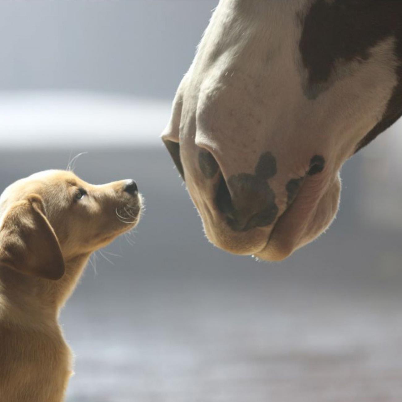 What Makes Super Bowl Ads Super?